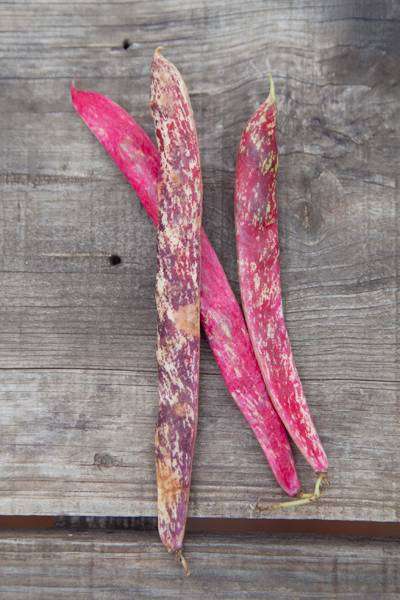 3415a45385fa I fly south to Olhao and the glorious vegetable colours and textures of the  Saturday market. Beans pods flecked with pink like a painter`s abstract are  a ...