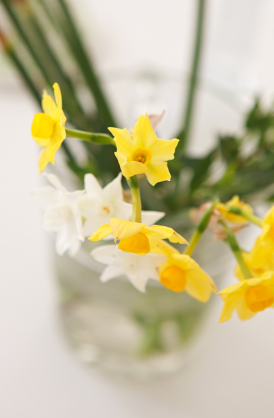 87a889d09a013a All the way from the balmy fields of the Scilly Isles : scented narcissi  arrive packed in folds of tissue paper .
